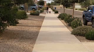 A dog pulls a bicyclist outside on a typical Arizona neighborhood sidewalk.