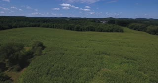 A high, slow forward moving aerial flyover of large corn fields in Western Pennsylvania.