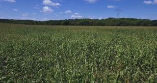 A low aerial flyover of vast corn fields in Western Pennsylvania.