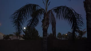 A nighttime establishing shot of a typical Arizona residence back yard with palm tree and moon in sky.