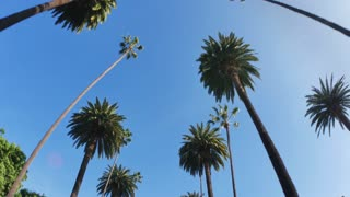 Driving Under Beverly Hills Palm Trees