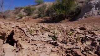 Dry Desert Land 3689