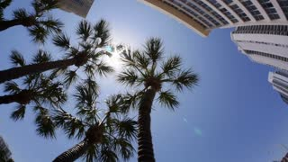 Looking Up Palm Trees in Miami