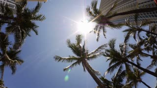 Looking Up in Miami Palm Trees