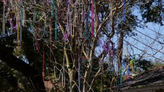 Mardi Gras Beads in a Tree on St Charles Avenue 4061