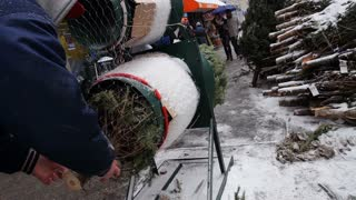 NEW YORK CITY - Circa December, 2013 - A Christmas tree salesman wraps a tree for delivery to a customer.