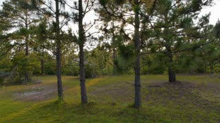North Carolina Pine Trees Sunset