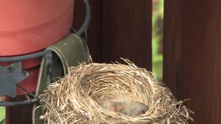 Robin and Nest 502