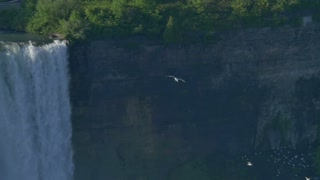 Seagulls flying over Niagara Falls