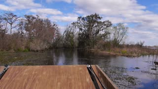 Swamp Airboat Ride POV 4039