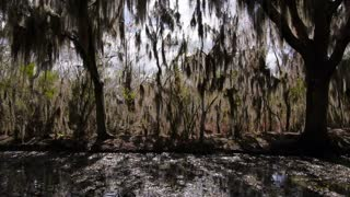 Swamplands of Louisiana 4081