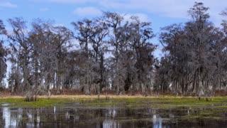 Swamps of Louisiana 4031
