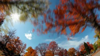 Tall Trees Fall Foliage Timelapse