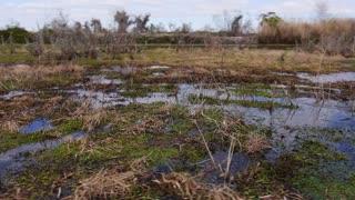 The Swamps of Louisiana 4022