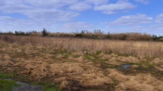The Swamps of Louisiana 4026