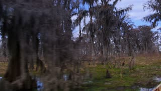 The Swamps of Louisiana 4032