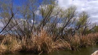The Treeline Shores of a Swamp in Louisiana 4017