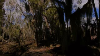 Treelined Shores of the Swamps in Louisiana 4020