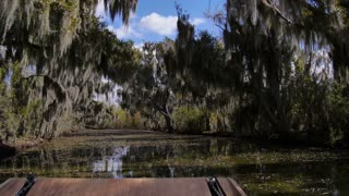 Trees in a Swamp in Louisiana 4019