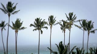 Tropical Storm Palm Trees