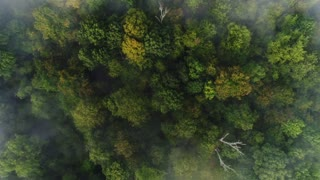 A straight down aerial view of a foggy Western Pennsylvania forest on an early Autumn morning.