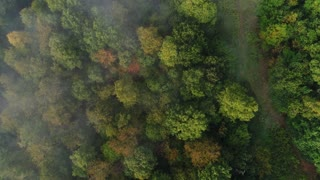 A straight down aerial view of foggy Western Pennsylvania treetops on an early Autumn morning.