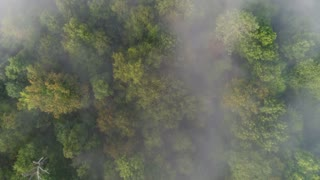 A straight down slow moving aerial view of a foggy Western Pennsylvania forest on an early Autumn morning.