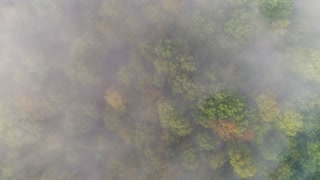A straight down slow moving rising aerial view of a foggy Western Pennsylvania forest on an early Autumn morning.