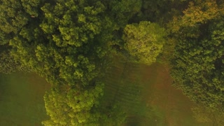 Aerial view looking straight down at the wooded treeline of a Pennsylvania forest.