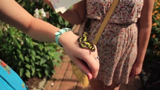 Women Look at Butterfly on Hand