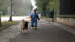 Baby boy is walking with dog, slow motion