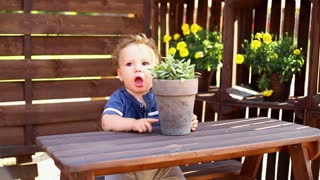 Baby is playing with flower pot at the table