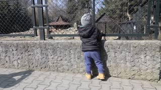 Boy looking at animals in the zoological garden, slow motion shot at 240fps