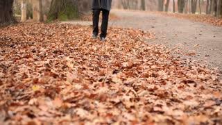 Legs, man walking on the fallen leaves in autumn park