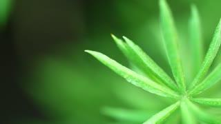 Close Up Leaf Or Macro Leaf