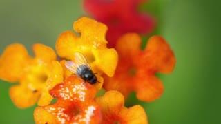 Flowers With Bee Or Macro Flowers