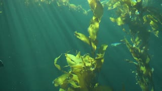Monterey Bay Aquarium Underwater Ray Of Light