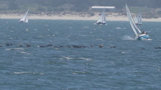 Monterey Bay Birds Flying In Slow Motion 02
