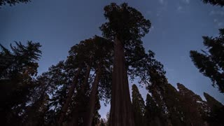 Sequoia National Park Starry Night Over The Tree Time Lapse