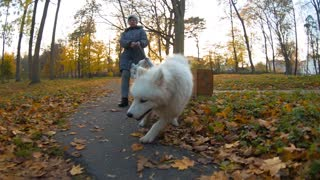 Dogs come together in the park in harness