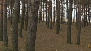 Running through the woods in the first person
