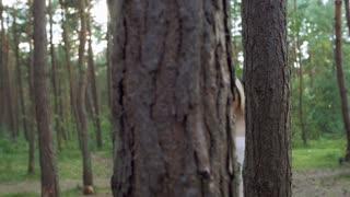 She runs through the trees