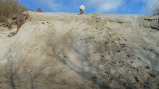 The dog runs to the meeting with a sandy slope