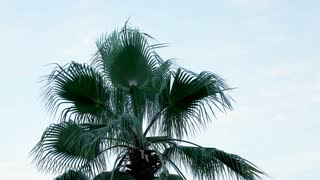 Big palm tree over the blue sky background