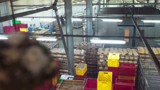 Aerial view of baking factory, bakery equipment and workers placing fresh bread into multicolored trays. Manufacturing process, transporting the production. Bakery business.