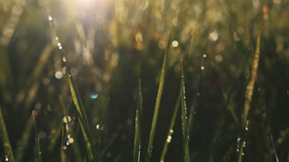 Bright morning dew on green mountain grass. Nature beauty, pureness. Feeling fresh, blooming, highlands. Camera stabilizer shot, landscape, extreme close up view