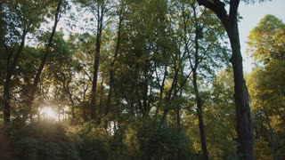 Bright morning sun vividly shines through the green forest trees. Sun rays through the trees. Calmness, relaxation, green peace