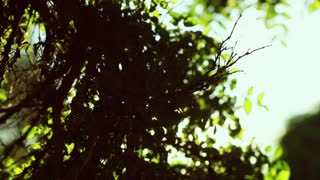 Bright sunshine through the green tree branches. Beauty of nature, organic. Beautiful sight. Slow motion, sun lens