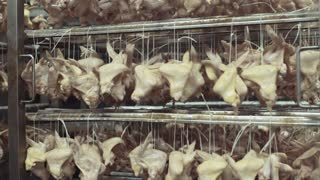 Close up view of hanging manufactured chickens in the process of smoking. Junk food, calories. Manufactured industry, food production. Fast food, unhealthy lifestyle.