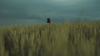 Distant view of a long-haired woman in a black dress running through the field of golden wheat, whirling in a strong stormy wind. Dark clouds on the background. Enjoying the life, being happy.